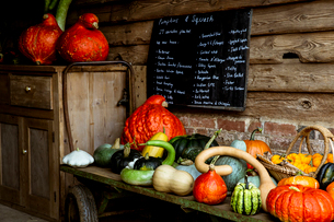 Selection of pumpkins and squash on wooden shelf in a farm shop.の写真素材 [FYI02265932]