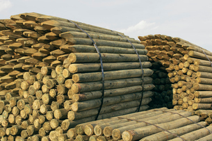 Piles of cut lumber, Eastend, Saskatchewan, Canada.の写真素材 [FYI02265944]