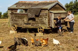 Woman and girl collecting eggs from a hen house on a farm.の写真素材 [FYI02265968]