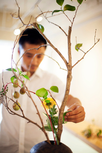 Japanese man in a flower gallery, working on Ikebana arrangement.の写真素材 [FYI02266017]