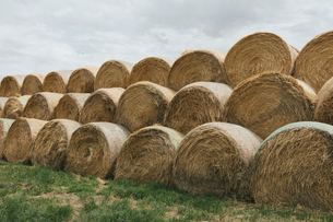 Stacked hay bales after the harvest, winter fodder for animals..の写真素材 [FYI02266039]