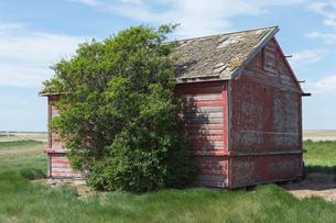 Small red barn and windswept tree, near Climax, Saskatchewan, Canada.の写真素材 [FYI02266046]