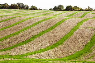 Farmland landscape in August, a rolling landscape with green and brown fields, green crop growing inの写真素材 [FYI02266051]
