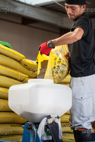 Japanese farmer pouring grain from yellow sack into white plastic container.の写真素材 [FYI02266057]