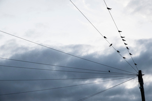 A moody grey sky with brighter cloud patches, and birds perched on telephone wires.の写真素材 [FYI02266064]