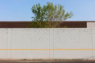 Tree behind playground wall and building, Swift Current, Saskatchewan, Canada.の写真素材 [FYI02266074]