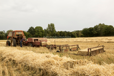 Tractor and straw baler in wheat field, farmer baling straw.の写真素材 [FYI02266091]