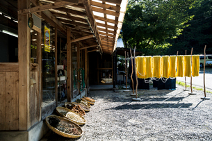 Exterior view of textile plant dye workshop, with yellow fabric hanging in the sun to dry and basketの写真素材 [FYI02266107]