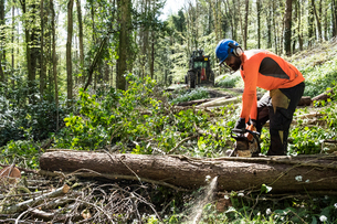 Man wearing bright orange top clearing part of forest. Cutting tree trunk with chain saw.の写真素材 [FYI02266141]