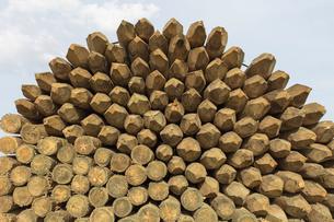 Piles of cut lumber, Eastend, Saskatchewan, Canada.の写真素材 [FYI02266201]