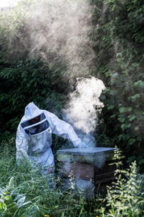 Beekeeper wearing protective suit at work, using smoker to calm bees.の写真素材 [FYI02266276]
