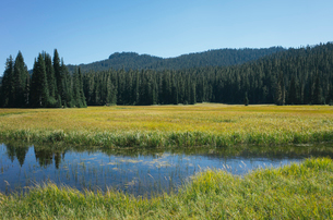 Bumping River flowing through alpine meadow and forest along the Pacific Crest Trail in the Cascadesの写真素材 [FYI02266363]
