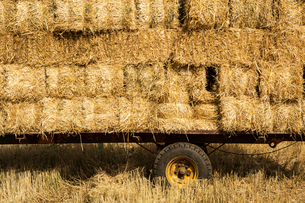 Close up of stack of straw bales on a trailer.の写真素材 [FYI02266392]