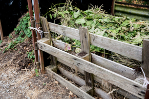 Compost heap constructed form wooden pallets in allotment.の写真素材 [FYI02266405]