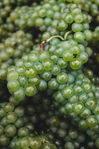 High angle close up of freshly picked bunches of green grapes at a vineyard.の写真素材 [FYI02266452]
