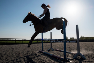 Silhouette of female rider jumping a hurdle on a showjumper horse.の写真素材 [FYI02266469]