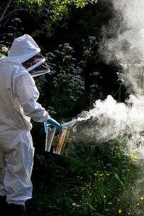 Beekeeper wearing protective suit at work, using smoker to calm bees.の写真素材 [FYI02266472]