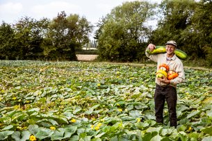 Smiling farmer standing in a field, holding selection of freshly harvested pumpkins.の写真素材 [FYI02266482]