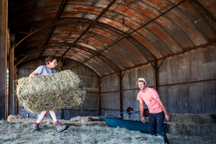 Two farmers stacking hay bales in a barn.の写真素材 [FYI02266498]