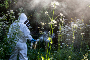 Beekeeper wearing protective suit at work, using smoker to calm bees.の写真素材 [FYI02266508]