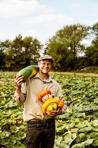 Smiling farmer standing in a field, holding selection of freshly harvested pumpkins.の写真素材 [FYI02266513]