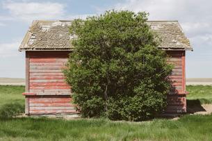 Small red barn and windswept tree, near Climax, Saskatchewan, Canada.の写真素材 [FYI02266527]