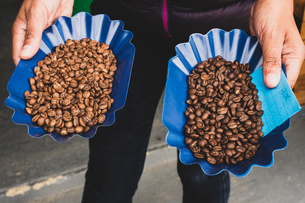 High angle close up of person holding two blue trays with freshly roasted coffee beans, one light anの写真素材 [FYI02266595]