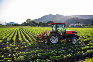 Japanese farmer driving red tractor through a field of soy bean plants.の写真素材 [FYI02266700]