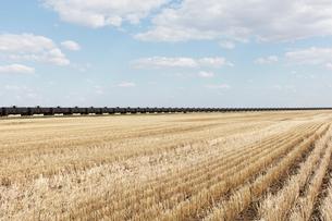 Oil train cars and fallow farmland, near Swift Current, Saskatchewan, Canada.の写真素材 [FYI02266723]