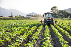 Japanese farmer driving red tractor through a field of soy bean plants.の写真素材 [FYI02266734]