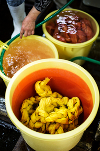 High angle view of bright yellow and orange fabric in plastic buckets in a textile plant dye workshoの写真素材 [FYI02266741]