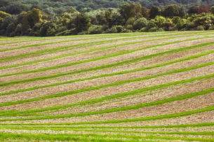 Farmland landscape in August, a rolling landscape with green and brown fields, green crop growing inの写真素材 [FYI02266750]