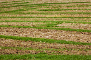 Farmland landscape in August, a rolling landscape with green and brown fields, green crop growing inの写真素材 [FYI02266784]