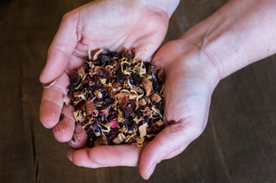 High angle close up of person holding small heap of red berry herbal tea infusion.の写真素材 [FYI02266834]