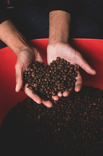 High angle close up of person holding freshly roasted coffee beans.の写真素材 [FYI02266862]