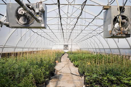 Rows of plants in greenhouseの写真素材 [FYI02269644]