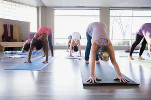 Women practicing downward facing dog in yoga classの写真素材 [FYI02271232]