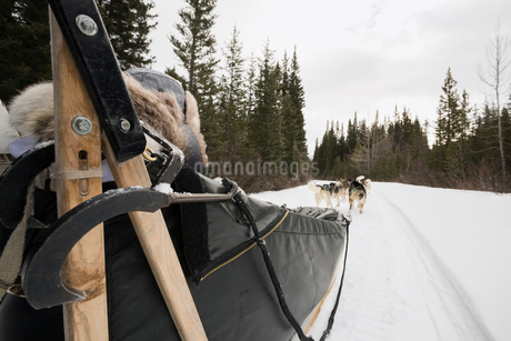Mother and daughter riding in dogsled in snowの写真素材 [FYI02273236]