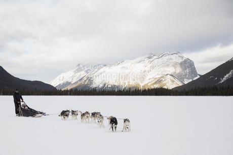 Dogsled in snowy field below mountainsの写真素材 [FYI02273365]
