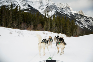 Dogsled on the move below snowy mountainsの写真素材 [FYI02273651]