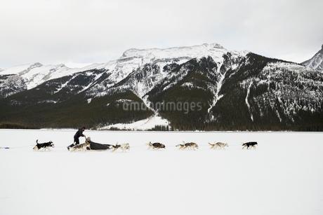 Dogsled in snowy field below mountainsの写真素材 [FYI02273882]
