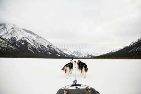 Dogsled in snowy field below mountainsの写真素材 [FYI02274190]