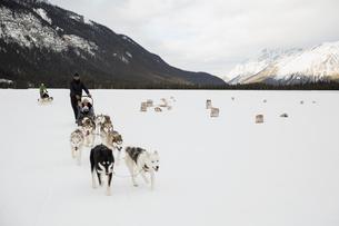 Dogsleds in snowy field below mountainsの写真素材 [FYI02274320]