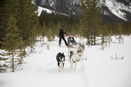 Dogsled in snowy fieldの写真素材 [FYI02274358]