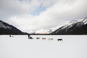 Dogsleds in snowy field below mountainsの写真素材 [FYI02274431]