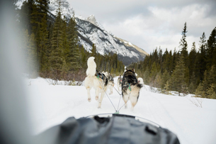 Dogsled on the move below snowy mountainsの写真素材 [FYI02274443]