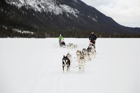 Dogsleds in snowy fieldの写真素材 [FYI02274908]