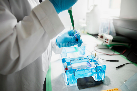 Scientist with pipette loading DNA gels in laboratoryの写真素材 [FYI02275738]
