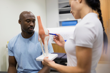 Physical therapist explaining knee model to patientの写真素材 [FYI02276435]