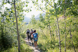 Hikers backpacks walking along sunny trail in woodsの写真素材 [FYI02278393]